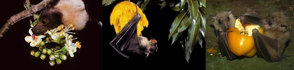 Batspollination23-horz